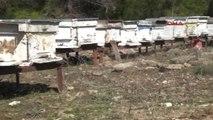Antalya Manavgat Domuz Çiftliğine Tepki