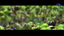 كيف تعرف زيت الزيتون الأصلي من المغشوش.. و كيفية معرفة أنواع زيت الزيتون و اختيار الأفضل !
