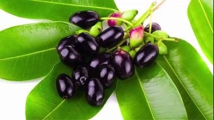 ডায়াবেটিস রোগের হোমিওপ্যাথি ঔষধ সিজিজিয়াম জ্যাম্বোলেনাম Syzygium jambolanum