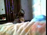 la chat a la tête qui tourne