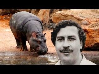 Have You Been To Pablo Escobar's Zoo?   #FactWar