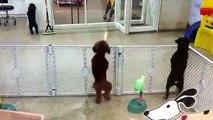Ihr süßer Hund, der sieht, wie sein Besitzer kommt, um auf sich selbst aufzupassen, ist sehenswert ...