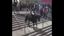 Ejecté par son cheval ce policier de la police montée Espagnole termine en bas des escaliers du stade de Madrid