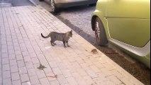 rat attract cat    cat fight    cat vs rat   cat & rat