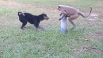 Funny animal video - Dog vs Monkey LIVE Animal Instincts -animals fight