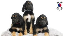 Scientists make puppy clones of world's first cloned dog