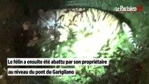 Un tigre en fuite abattu dans les rues de Paris