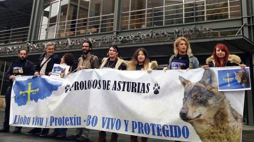 Concentración en defensa del LOBO ante las consejerías del Gobierno del Principado de Asturias