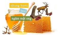 [NhungHuouShop.com] Nhung hươu tươi ngâm mật ong rất tốt cho sức khỏe