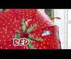 SuperHero Kids Go To School Learn Colors with UMBRELLAS Johny Johny Yes Papa Nursery Rhymes