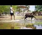 Arizona Miniature Horse Breeders fun in the water with miniature horse (1)