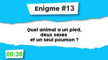 Énigme #13 : Animal bizarre