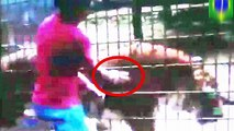 Tiger attacks boy  Father allows son to climb over fence to feed tiger at zoo in Cascavel, Brazil