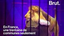 Des associations demandent l'interdiction d'animaux sauvages dans les cirques