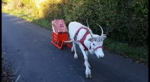 White Reindeer Leads the Way With Gifts in Tow
