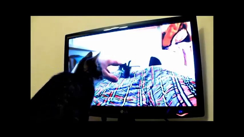 Funny Cats Compilation -Funny Cat Videos –  Funny cat Videos for kids -3