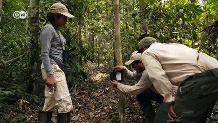 La tortuga blanca de Perú, en peligro | Global 3000