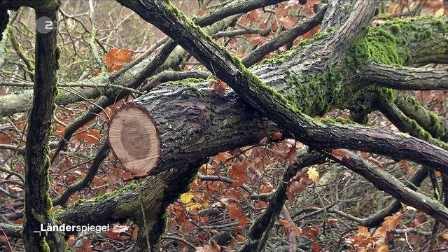 Hammer der Woche – Wald muss weg für Öko-Fläche