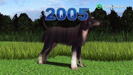Clonación animal: Científicos hacen clones del primer perro clonado del mundo - TomoNews