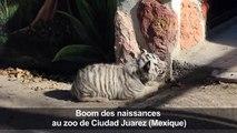 Des bébés animaux font le bonheur d'un zoo mexicain