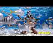 Dallas Video Marketing  Business Profile Video  Dallas Marketing Video