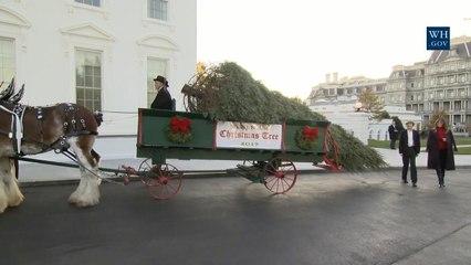 Melania and Baron Trump Welcome A Christmas Tree