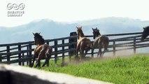 三井由美 草原を走りまわる馬