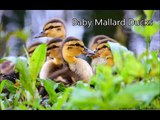 Best Cute Baby Animal Videos, Super Funny Animals, Cutest Pets, Lovely Animals, - YouTube