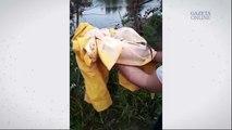 Jacaré do papo amarelo resgatado próximo a rua na Serra