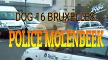 POLICE EN ACTION A MOLENBEEK (BRUXELLES)