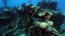 Mistérios do Triângulo das Bermudas - Documentário
