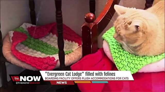 Exclusive cats-only hotel offers plush accommodati