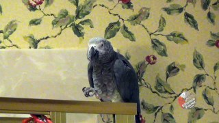 Parrot has new solution to the question as to why