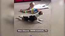 BEBEGE NASIL YURUMASI GEREKTiGiNi OGRETEN SEViMLi KOPEK - CUTE DOG and BABY with PLAY