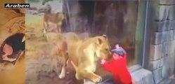 Animal Attacks | Tiger Attacks and Kill Man Lion Attacks Human 2017 Crazy Animals #5