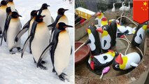 Zoo in China tricks zoo-goers into paying money to see inflatable penguins - TomoNews