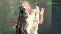 Ca vous dirait de vous baigner avec ce crocodile... Elles l'ont fait