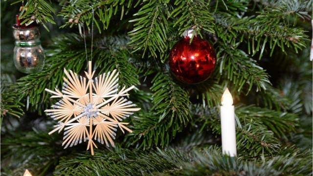 Fun Facts About Christmas Trees