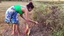 Brave Girl Catch Village Snake in My Village - How To Catch Village Snake In My Village