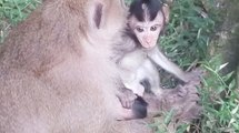 Cute Baby Monkey Cry, Baby Monkey Very Lovely