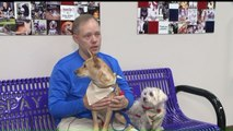 Veteran Reunites With Dogs After 9-Month Deployment