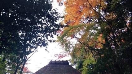 [한일자막] 나혼자일본!-너무예뻤던 야간개장 교토의 단풍 (에이칸도 젠린지) 일상78편 Daily Japan Vlog #78  [韓日字幕]日本で一人暮らし!- すごく綺麗だった永観堂禅林寺のライトアップ 78編
