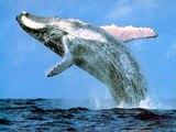 Les plus gros animaux du monde marins