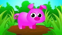 Where is my Piggy Tail Help this Cute Pink Piggy Bounce Again _ Songs by Little Angel-STiiZu5FYkI