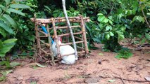 Amazing Quick Rabbit Trap Using PVC With Tree - Catch Rabbit With Live Rabbit Traps That Work 100%