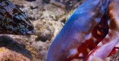 Mercan Lagosu ve Ahtapotun Ortak Balık Avı