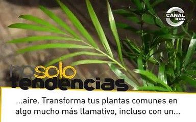 ¿Plantas que vuelan?  |  nosolotendencias.es