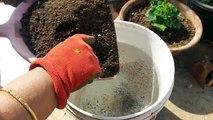 How to make Compost Tea at Home _ Compost Tea - Organic Fertilizer _ Fun Gardening _ 28 Nov, 2017-_iXhu5wKvzc