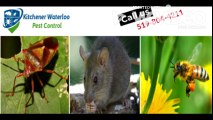 Pest Control & exterminator