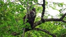 Eagle on the tree in safari-amazing eagle birds of mother nature-4k rare eagle birds video